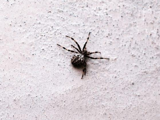What kind of fresh hell is this? There's a spider in your house! HORROR OF HORRORS! What should you do about it?