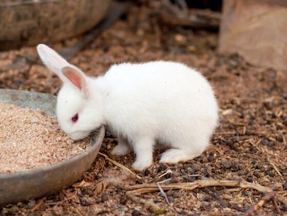 Bunnies are cute farm animals. Whom do you feed carrots to every morning?
