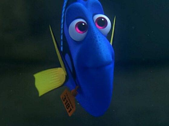 would you rather go on a summer picnic with Olaf or go whale-watching with Dory?