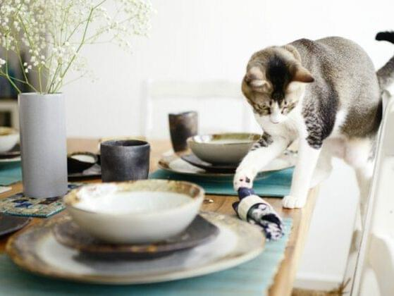 Pick a classic cat behavior to annoy your human.