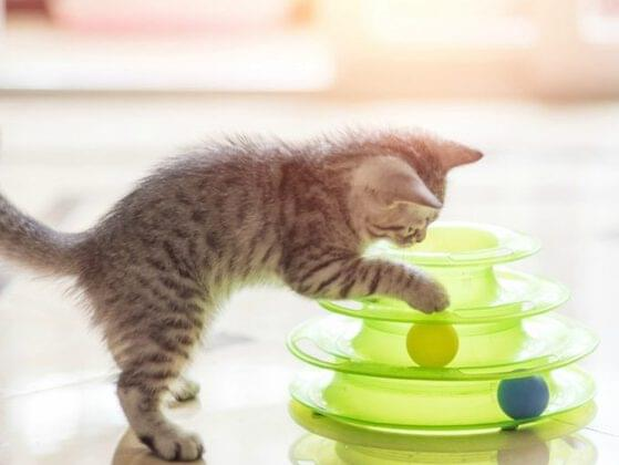 Which of these is the best toy for a cat?
