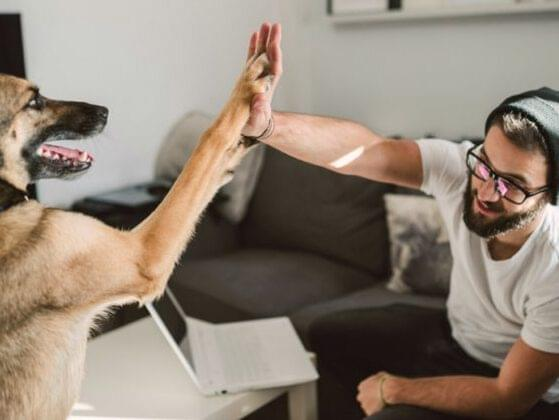 What are you most looking forward to doing with your doggo?