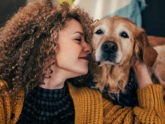 How would you describe the look of your ideal dog?