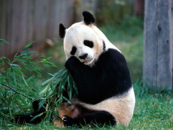 Snack time! Snack Panda Sez: pick a snack!