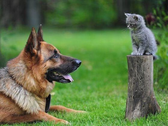 Do you prefer dogs or cats?