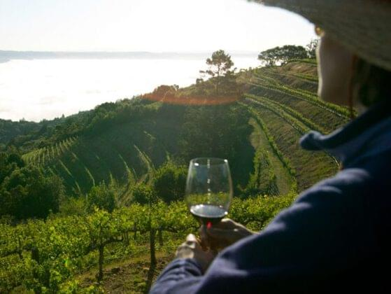 Would you rather go wine tasting in Napa, California or scotch tasting in Scotland?