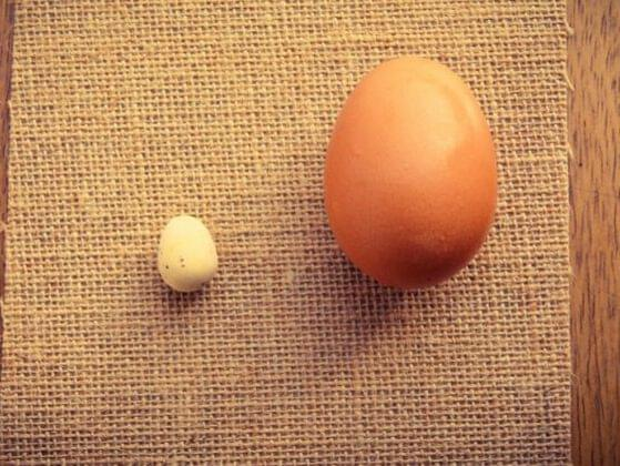 True or false: Larger eggs are laid by older hens.