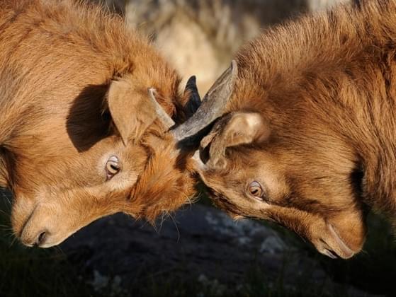 Do you avoid confrontation?