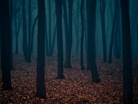 Would you walk through these woods?
