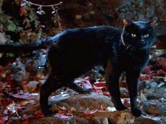 What's the name of the black cat in Hocus Pocus?