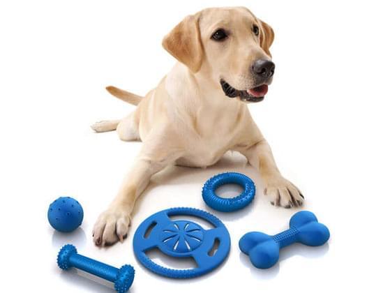 Pick a dog toy.