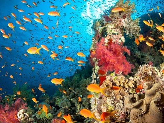 Do you prefer coral reefs or open ocean?