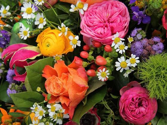 Pick a flower: